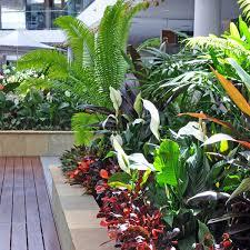 atrium gardens brisbane office plants