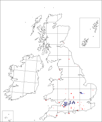 Ornithogalum pyrenaicum | Online Atlas of the British and Irish Flora