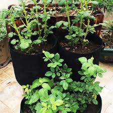 2019 hot <b>new</b> products <b>3Pcs</b> Plant Grow Bags <b>Nonwoven</b> Cloth Pot ...