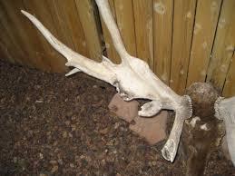 """- """"Funky Bull Elk Antlers"""" - justinbaecker51508-2"""
