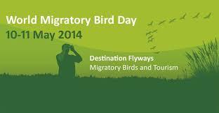 Resultado de imagen para dia mundial de las aves