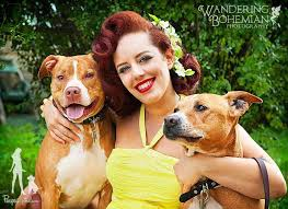 Image result for pitbulls and pinups