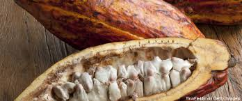 Résultats de recherche d'images pour «image feve de cacao libre droit à l'image»