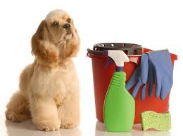 <b>Cleaning</b> Your <b>Pet</b> Friendly Home - Dogtime