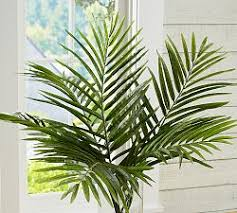 large potted trees and plants with lots of green leaves are ideal for bringing in positive energy to your feng shui office having a mountain behind you is bringing feng shui office