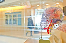 <b>Hearing</b> Loss May Lead to Cerebral <b>Atrophy</b> | <b>Hearing</b> Center of ...