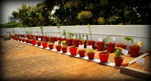 kitchen garden created for rosary matriculation school since we could work on the ground we h