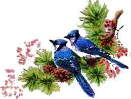 """Résultat de recherche d'images pour """"gifs des oiseaux"""""""