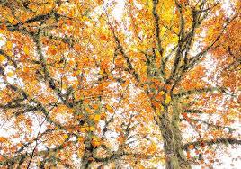 Resultado de imagen de seurat y el otoño