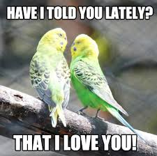 Cute Love Memes For Him And For Her - Love Is Not Abuse via Relatably.com