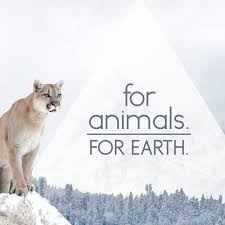For Animals For Earth - Simple ideas to make a difference.