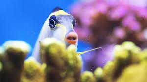 Stop a <b>Fish</b> from Chasing Its <b>Tank</b> Mates | <b>Aquarium</b> Care - YouTube