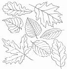 Осенние листья раскраска