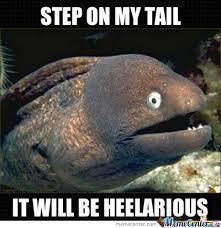 Memestache Bad Joke Eel images via Relatably.com