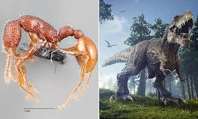 rex 39 ant