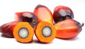 Afbeeldingsresultaat voor palm oil