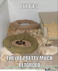Cute Puppy Memes. Best Collection of Funny Cute Puppy Pictures via Relatably.com