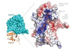 Researchers describe structure of SARS-CoV-2 proteins <b>suitable</b> for ...