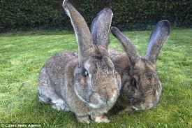 Αποτέλεσμα εικόνας για The Battle of the Rabbits