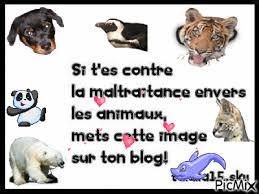 Résultats de recherche d'images pour «phrase animaux maltraité»