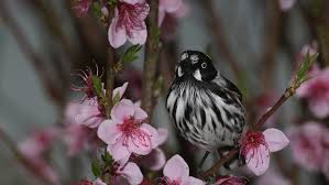 <b>Spring</b>, summer, <b>autumn</b> and winter — why do we have seasons ...