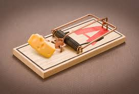 Image result for mouse trap images