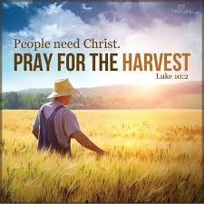 Image result for images of the harvest field