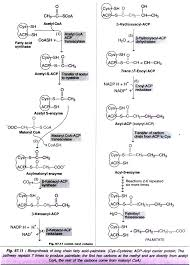 metabolism of lipids   cycles  with diagram biosynthesis of long chain fatty acid palmitate
