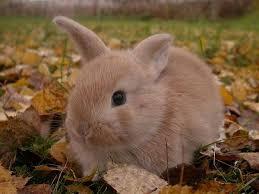Résultat de recherche d'images pour 'bébé lapin trop mignon'
