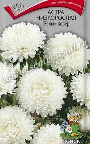 <b>Астра</b> низкорослая <b>Белый ковёр</b>, 0,2г - <b>астра</b> - <b>Семена</b> цветов ...