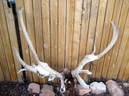 Justin Baecker found this skull this spring. What a cool find! - justinbaecker51508-1