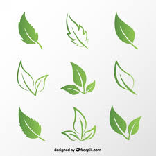Premium Vector | <b>Green leaves</b>