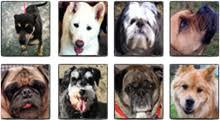 Puppy Age Calculator | Puppies | PEDIGREE