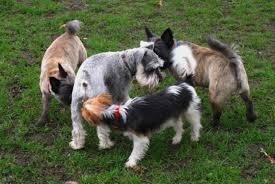 Resultado de imagem para cachorro cheirando cachorra