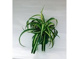 <b>Растение Плант</b>-в ассортименте D12 H25-30 купить по цене руб ...
