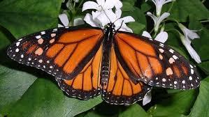 Résultats de recherche d'images pour «papillon»
