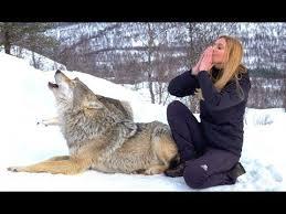 I HOWL WITH NORWEGIAN <b>WOLVES</b> - <b>WOLF</b> HOWL - YouTube