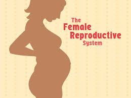 <b>Female Reproductive System</b> (for Teens) - KidsHealth