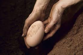 The Surprising Link Between <b>Egg Shape</b> and Bird Flight
