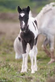 best ideas about baby horses horses cutest click site and check out hot i love my horses shirts this website is excellent tip you can search your last or your favorite shirts at