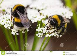 Image result for bees nectars
