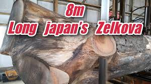 <b>8m</b> Long Japan's Zelkova - YouTube