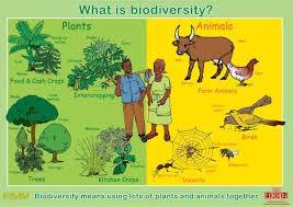 essay on biodiversity conservation