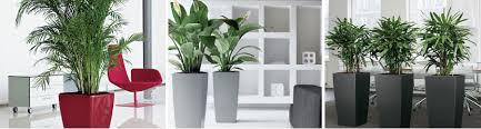 office indoor plants hire plants supplier brisbane gold coast sunshine coast brisbane office plants