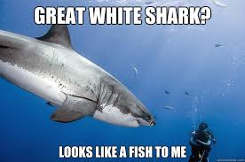 Great white shark? Looks like a fish to me - Fearless Frank ... via Relatably.com