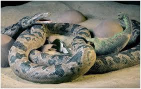 Una serpiente que comía dinosaurios