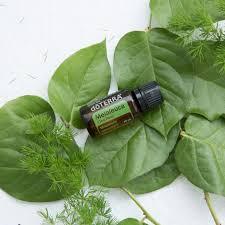 <b>Tea Tree</b> Oil Uses and Benefit | doTERRA <b>Essential Oils</b> | dōTERRA ...