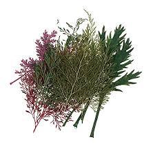 Baoblaze Multiple Natural <b>Dried Flowers</b>, <b>Real</b> Press Annual phlox ...