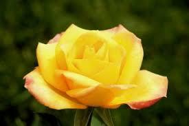 Rahsia disebalik indahnya bunga