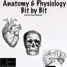 Anatomy and Physiology - Bit by Bit